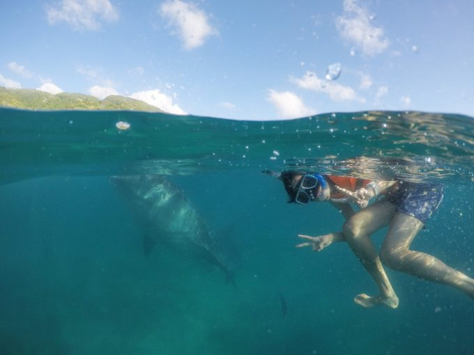 ジンベエザメだけじゃないツアーの海中写真