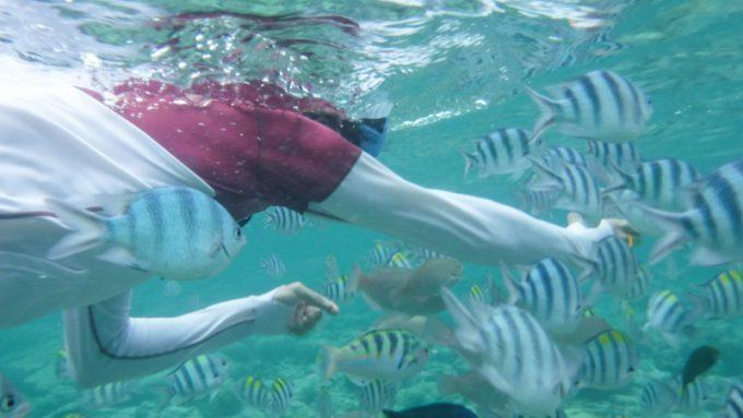 ナルスアン島でのスノーケリングで魚が寄ってきている