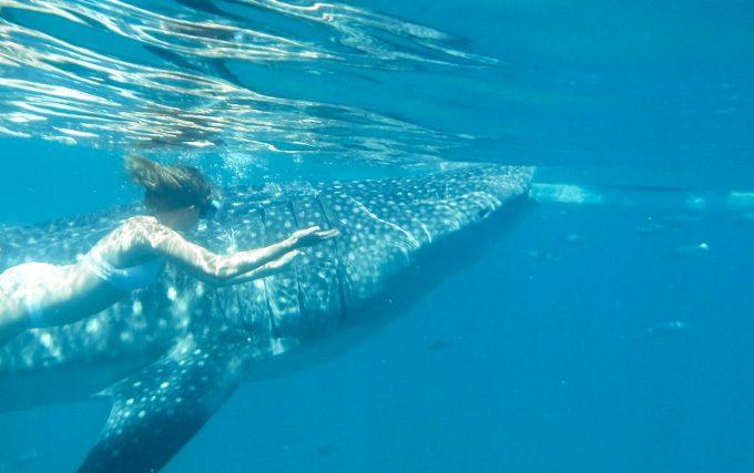 ジンベエザメと一緒に泳ぐ