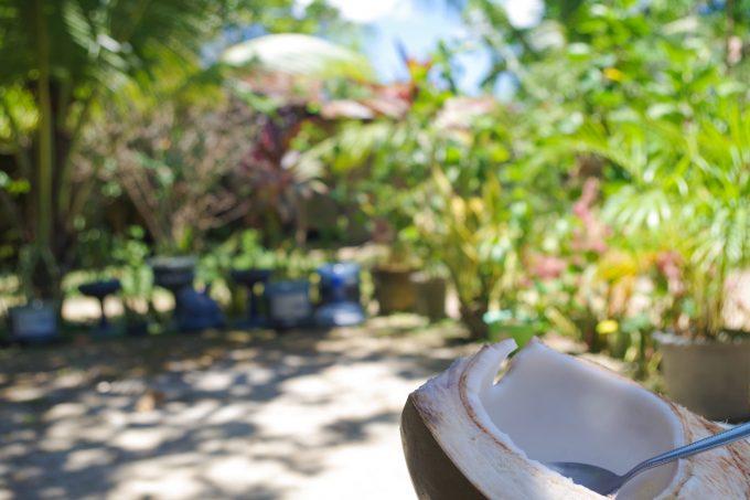 ココナッツを味わうイメージができる写真