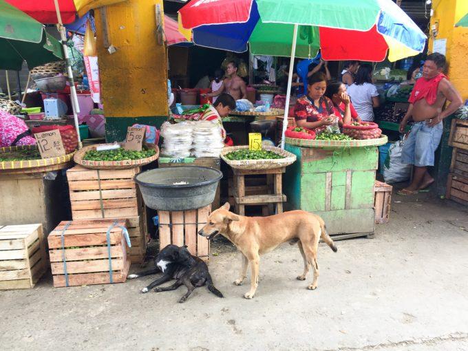 カルボンマーケットに居る犬の写真
