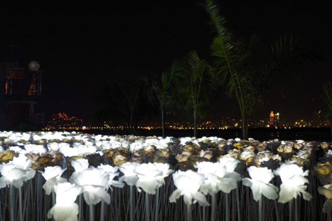 1万本のバラ園の写真