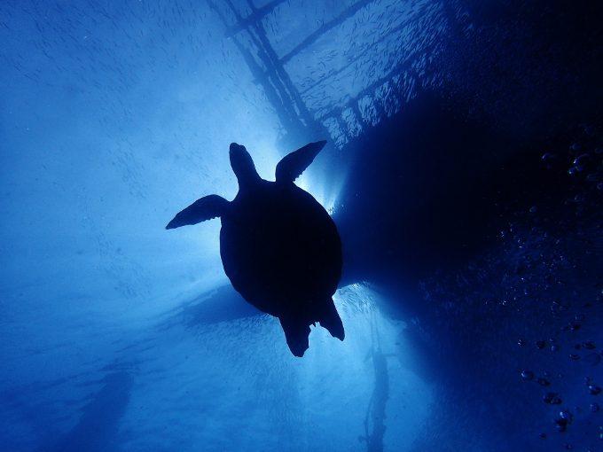 下からウミガメを発見した写真