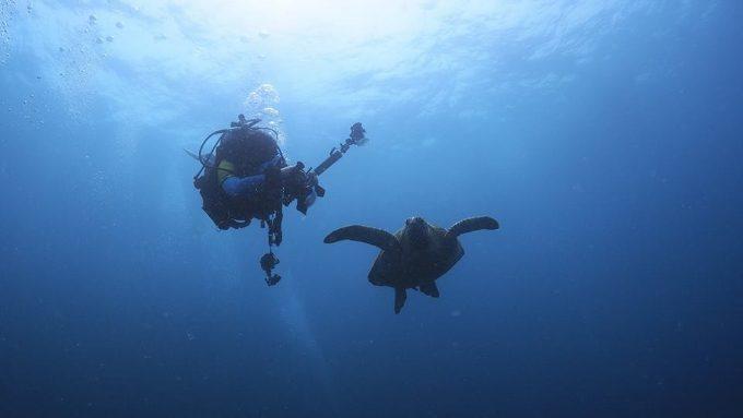 ダイビングで写真を楽しむ写真