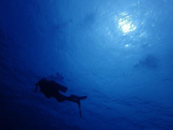 ダイビングで浮遊感を楽しんでいる写真