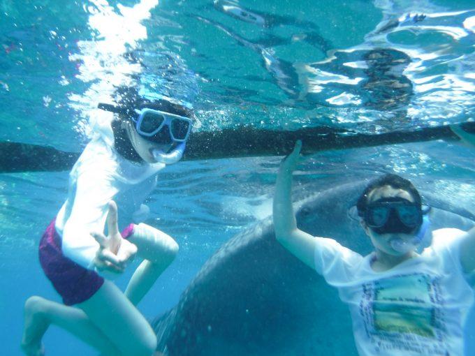 ジンベエザメと一緒に泳いでる写真