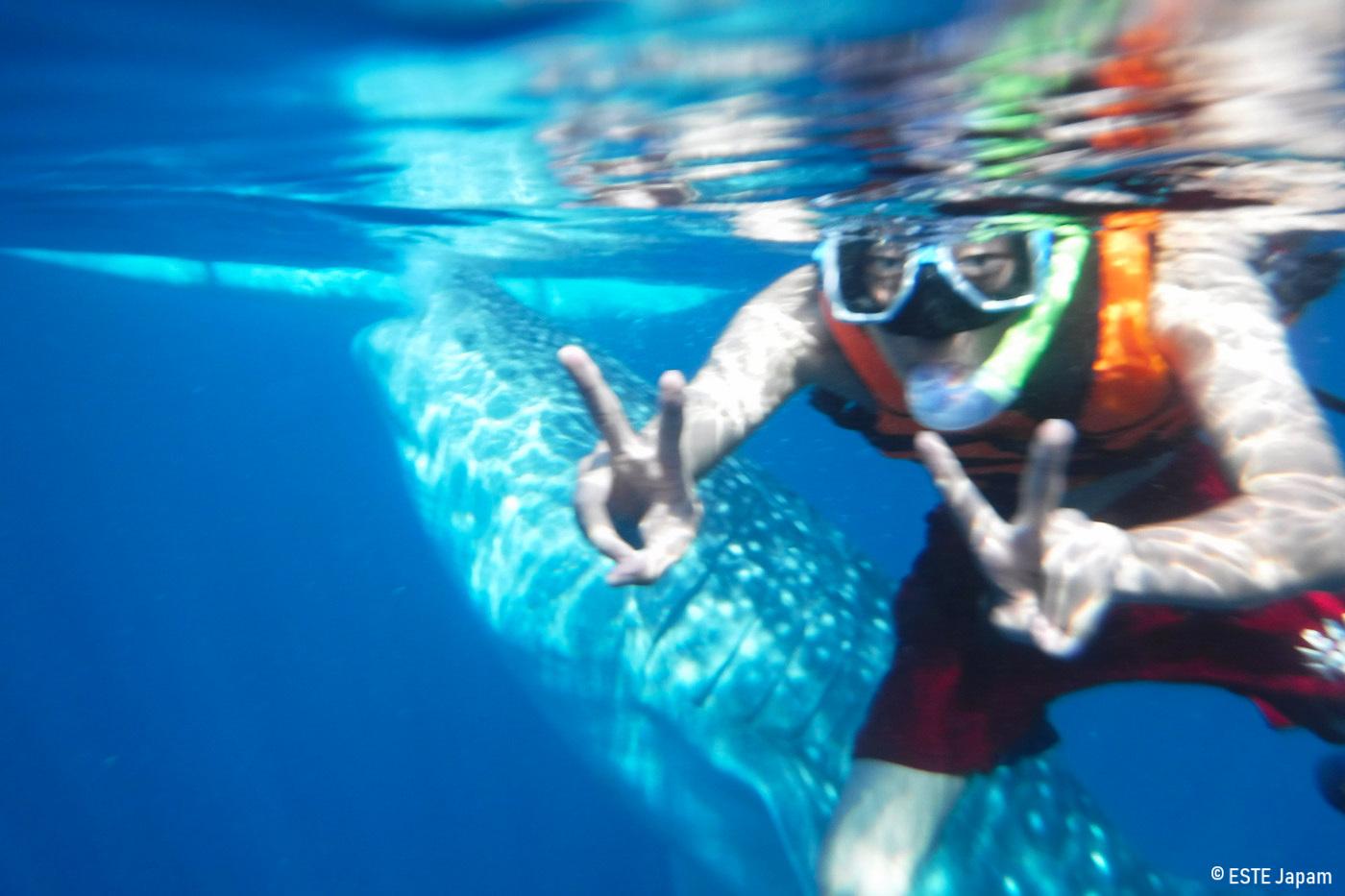 ボジンベエザメだけじゃないツアーでジンベエザメと泳いでる男性