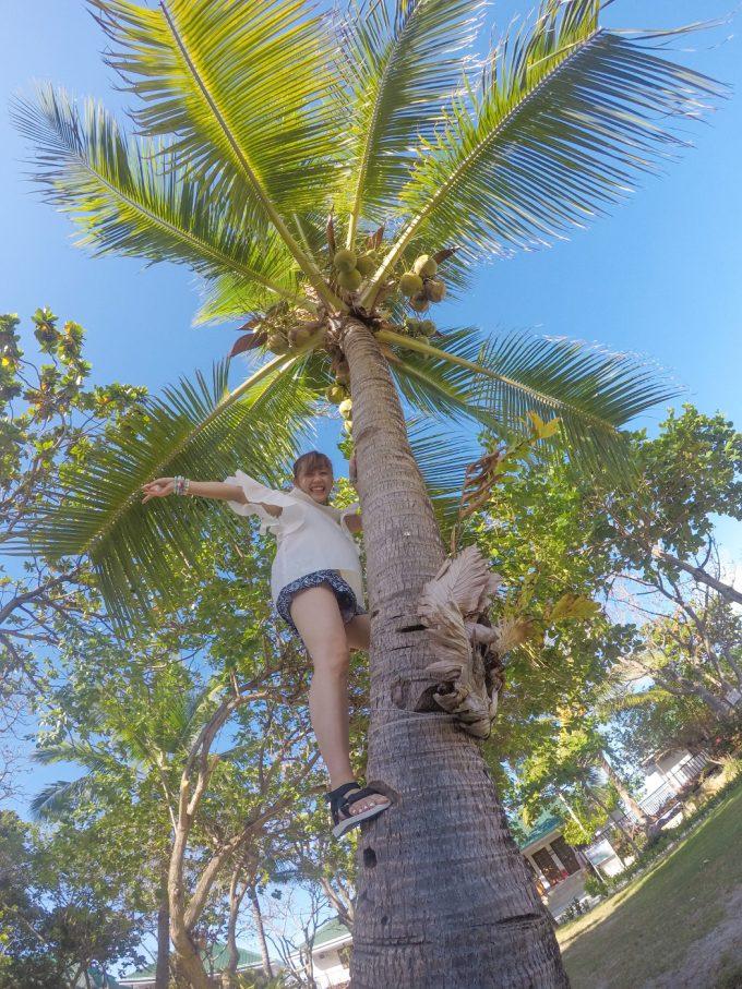 ヤシの木に登る女性の写真