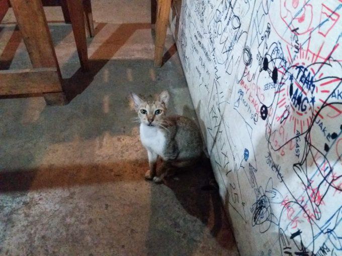 ディップジログの店内の猫の写真