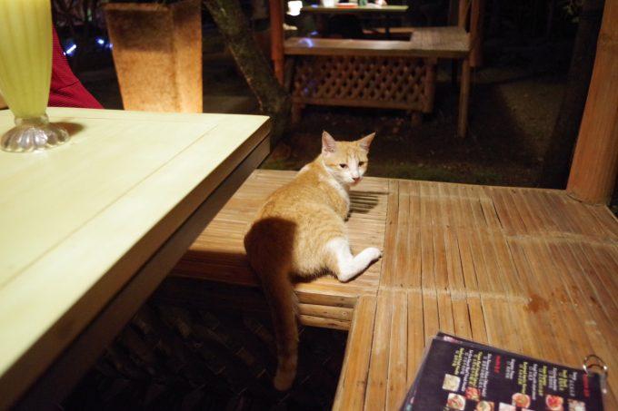 カラチュチにいる猫の写真