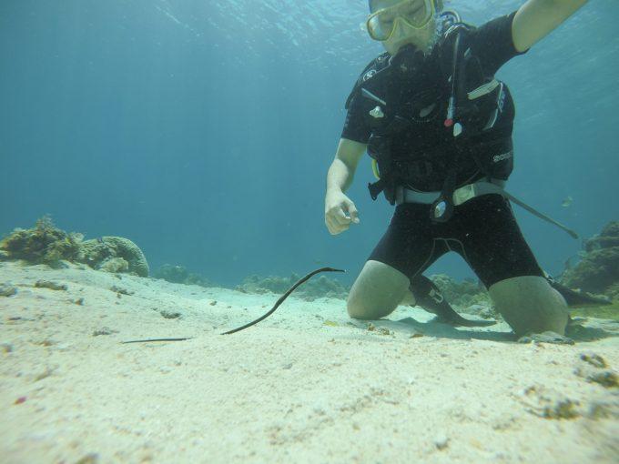 体験ダイビングでタツノオトシゴを見ている男性