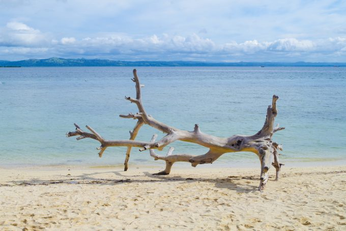 パンダノン島の流木