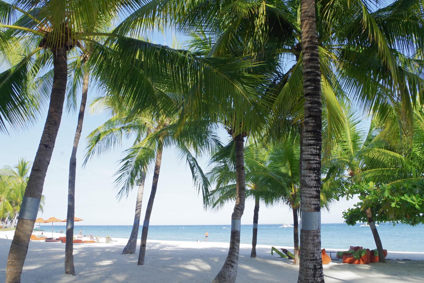 サウスパームホテルのビーチとヤシの木
