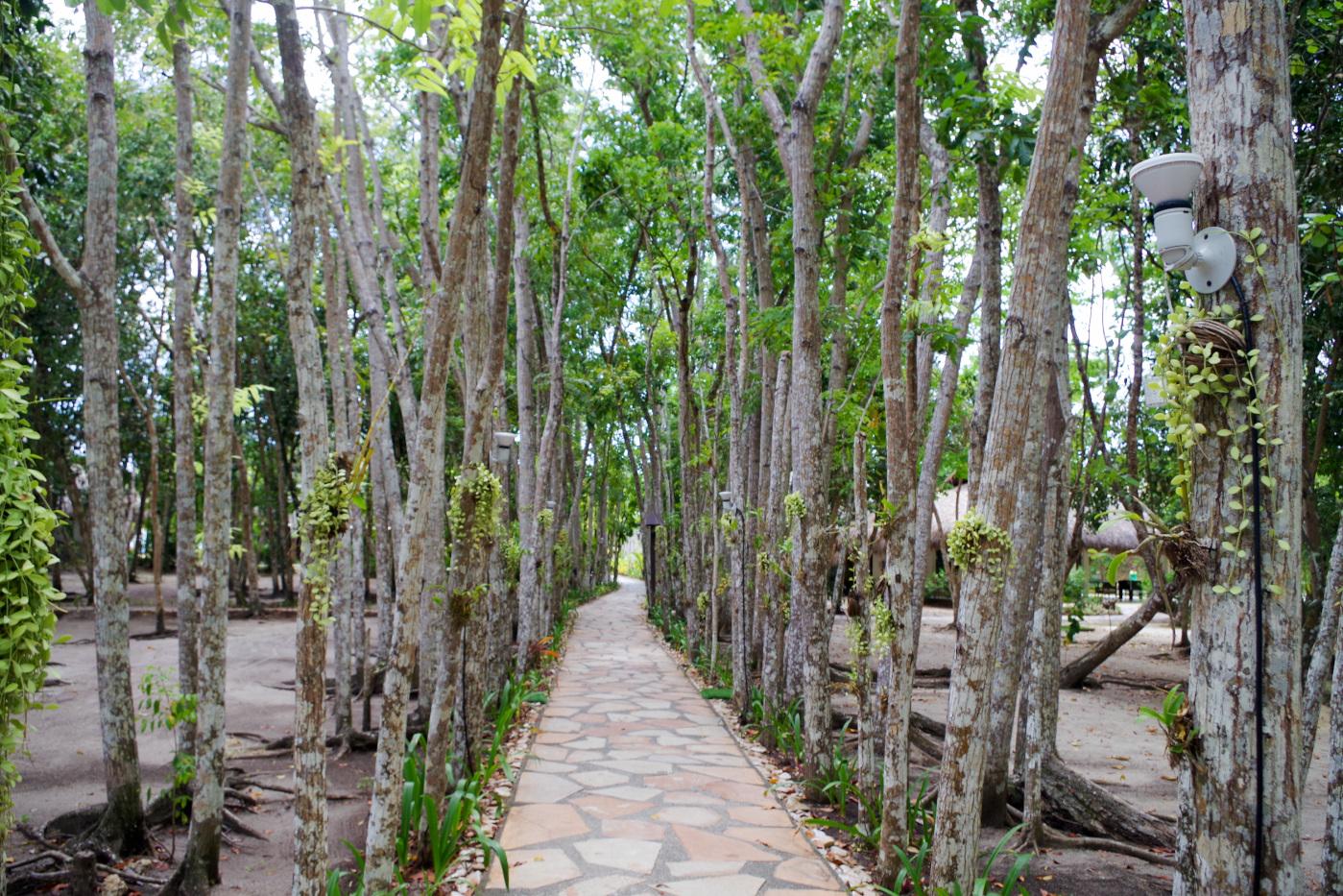 サウスパームのヤシの木に囲まれた小道