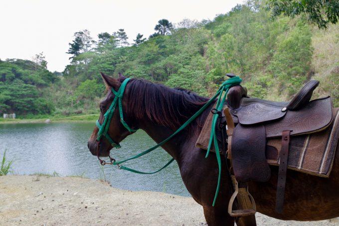 乗馬体験のイメージ